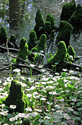 Cypress Knees Photos - Mossy Congregation II by Suzanne Gaff