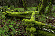 Split Rail Fence Photo Prints - Mossy Fence 4 Print by Bob Christopher