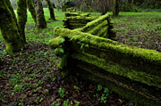 Split Rail Fence Acrylic Prints - Mossy Fence 5 Acrylic Print by Bob Christopher
