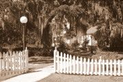Picket Fences Posters - Mossy Live Oak and Picket Fence Poster by Carol Groenen