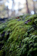 Forest Floor Photos - Mossy Log by Carole Hinding