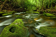 Water Flowing Framed Prints - Mossy Rainforest Stream Framed Print by Matt Tilghman