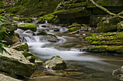 Jeka World Photography Prints - Mossy Stream Print by Jeka World Photography