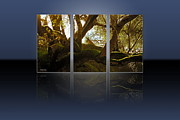 Beautiful Tree Posters - Mossy Tree Triptych 1 Poster by Cheryl Young