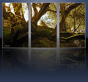 Soft Lighting Prints - Mossy Tree Triptych 2 Print by Cheryl Young