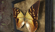 Moth-butterflies Digital Art - Moth At Rest by Phil Vooz