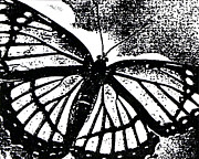 Black And White Print Reliefs - Moth by Jeanmarie DeKleine
