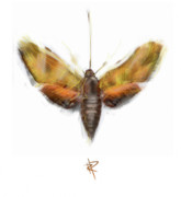 Transform Posters - Moth Poster by Russell Pierce