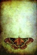 Dreamlike Framed Prints - Moth Framed Print by Stephanie Frey