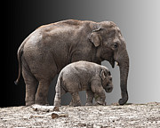Mother And Baby Print by Sheila Laurens