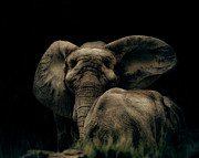 African Elephant Prints - Mother and Child Print by Arne Hansen