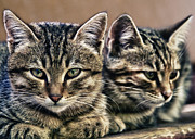 Mother And Child Wild Cats Print by Stylianos Kleanthous