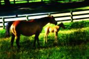 Horse Stable Posters - Mother and Foal Poster by Bill Cannon