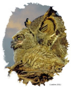 Great-horned Owls Framed Prints - Mother And Nestling Owls Framed Print by Larry Linton