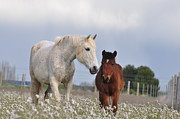 Foal Metal Prints - Mother And Son Metal Print by By Ana_gr
