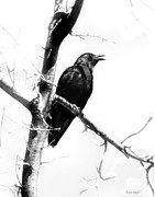 Crow Digital Art - Mother Crow by Rhonda Strickland