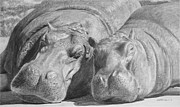 Hippopotamus Drawings - Mother-Daughter Time by Heather Ward