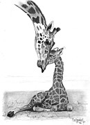 Love The Animal Drawings Prints - Mother Giraffe and The Baby Print by Eduardo Crowder