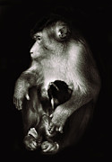 Zoo Photo Originals - Mother by Ivan Vukelic