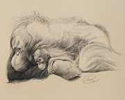 Orangutan Drawings - Mother Love by Albert Casson