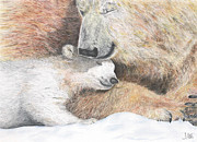 Polar Drawings Prints - Mother Love Print by John Hebb