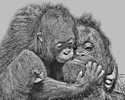 Orangutans Posters - Mother Love Poster by Larry Linton