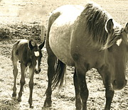 Wild Horse Pyrography Prints - Mother Love Print by Tess  Marie