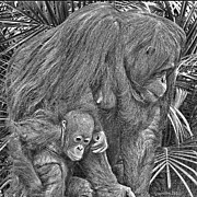 Orangutans Framed Prints - Motherly Love Framed Print by Larry Linton