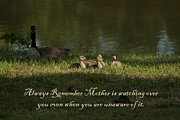 Mother Goose Posters - Mothers Watchful Eye Poster by Kathy Clark
