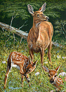 Deer Originals - Mothers Worry by Richard De Wolfe