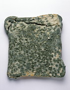 Spoiled Framed Prints - Mouldy Bread Framed Print by Cordelia Molloy
