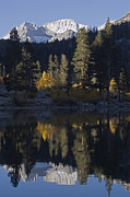 Rock Creek Lake Prints - Mount Abbot 13701 Ft Reflecting In Rock Print by Rich Reid