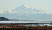 Mount Baker Framed Prints - Mount Baker from Boundary bay Framed Print by Pierre Leclerc