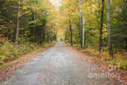 Mount Clinton Road - Beans Grant New Hampshire Print by Erin Paul Donovan