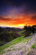 Walnut Tree Photograph Posters - Mount Diablo Sunset 2. Poster by Laszlo Rekasi