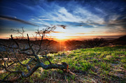 Walnut Tree Photograph Posters - Mount Diablo Sunset Poster by Laszlo Rekasi