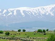 Mount Hermon Print by Issam Hajjar