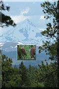 Framing Posters - Mount Jefferson With Pines Poster by Laddie Halupa