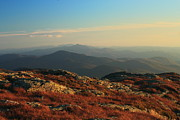Alpine Zone Posters - Mount Mansfield Alpine Zone Autumn Poster by John Burk