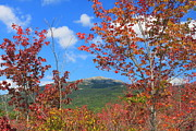 Red Maple Framed Prints - Mount Monadnock Red Maple Foliage Framed Print by John Burk