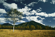 Volcanoes And Volcanic Action Acrylic Prints - Mount Nantai San And A Birch Tree Acrylic Print by Martin Gray