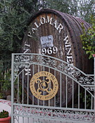 Vineyards Photos - Mount Palomar Winery by Viktor Savchenko
