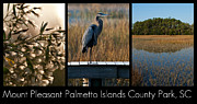 Mount Pleasant Posters - Mount Pleasant Palmetto Islands County Park  Poster by Melissa Wyatt