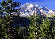 Mount Raineer 1 Print by Marty Koch