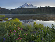 Mt Rainier National Park Art - Mount Rainier And Reflection Lake Mount by Tim Fitzharris