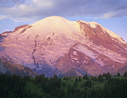 Snow-covered Landscape Posters - Mount Rainier At Sunrise Mount Rainier Poster by Tim Fitzharris