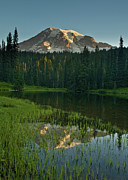 Pacific Northwest Framed Prints - Mount Rainier Dawn Framed Print by Mike Reid