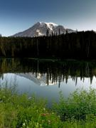 Snow Cap Photos - Mount Rainier from Reflection Lake Washington by Brendan Reals