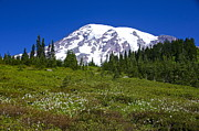 Mount Rainier In Summer Print by Sean Griffin