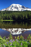 Lush Green Framed Prints - Mount Rainier Reflection Lake Wildflowers Framed Print by Pierre Leclerc